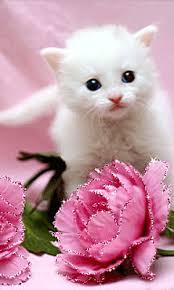imagenes de amor con rosas animadas imagen animada de lindo gatito con detalles y gesto de amor rosas