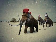 man mammoth tusk extinct gravel pit