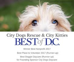 Sponsor A Puppy For The Blind City Dogs Rescue U0026 City Kitties Washington Dc City Dogs Rescue