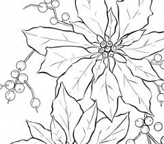 poinsettia coloring pages mexico poinsettia drawing images reverse search