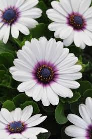 30 super cute daisy tattoo ideas daisy flower tattoos flower