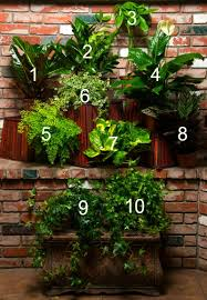 10 houseplants for a healthy new year 1 croton 2 zz plant 3