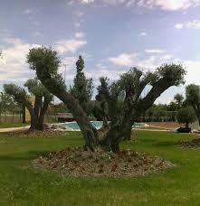 albero giardino albero da giardino mazzonetto