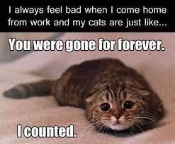 Cat Lover Meme - funny cat pics
