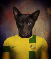 accounting resume exles australian kelpie lab 17 best soccer nations dogs by life on white creative images on