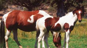 breeding horses for color expert advice on horse care and horse