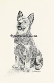belgian sheepdog australia german shepherd belgian tervuren u0026 sheepdog old english sheepdog