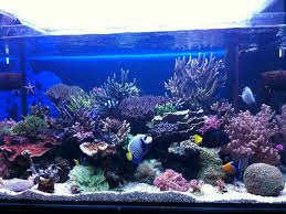 Aquascape Reef Most Beautiful Reef Tanks All Time Ratemyfishtank Com