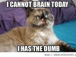 Monday Cat Meme - send you a great cat meme tiffany godwin simbi