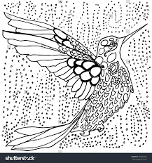 hummingbird coloring page black white drawing stock vector