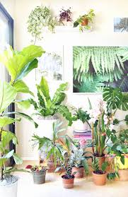 beautiful house plants 5 best house plants inspirational 18 most beautiful indoor plants