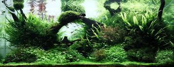 the top 5 best aquascaping plants aquarium info