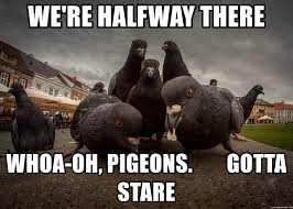 Halfway There Meme - we re halfway there whoa oh pigeons gotta stare pigeons in the