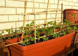 garden ideas indoor vegetable garden apartment youtube dunneiv