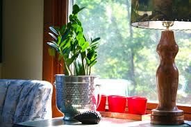 5 indoor plants that are almost impossible to kill porch advice