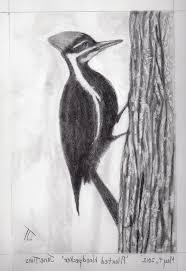 animals pencil art art gallery pencil drawings of animals pencil