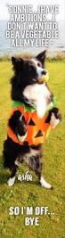251 best halloween costumes border collie halloween pictures asha