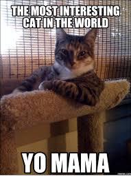 Random Cat Meme - 25 best memes about most random picture on the internet cat