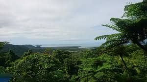 a journey in time daintree rainforest migrating minna