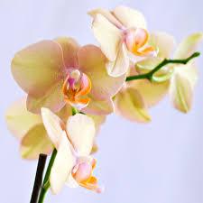 top flowers plants