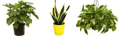 plants that grow in dark rooms 5 affordable ways to brighten a dark space dicorcia design plants