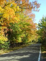 visit petoskey michigan 119 fall color tour tunnel trees