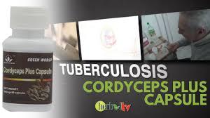 Obat Tbc cordyceps plus capsule obat tbc alami tuberculosis