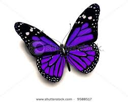 the 25 best purple butterfly ideas on