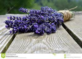 lavender bouquet lavender bouquet stock photo image of lavender herbaceous 56639342