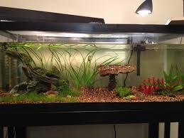 aquarium decoration ideas freshwater beautiful diy aquarium decorations oo tray design diy aquarium