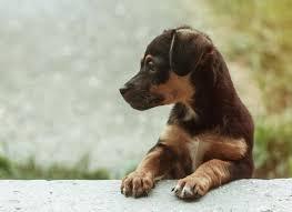 dog wallpapers dog desktop images hd dog images download dog