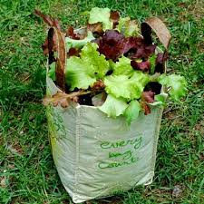 growing lettuce in a reusable grocery bag