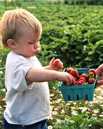 Pumpkin Picking Places In South Jersey by Where To Find Pick Your Own Strawberry Farms In Central New Jersey