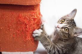 eviter griffe canapé eviter les griffures du sur le mobilier bricofamily