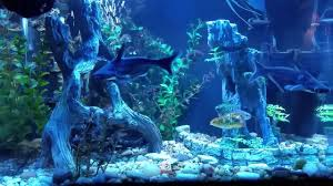 aquarium ornaments mangrove tree roots and cave with cliffs sharks