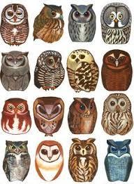needle felted owls felt with feeling needle