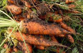 Gardening Tips For Summer - prep blog review gardening tips for summer survivopedia