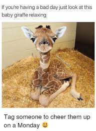 Having A Bad Day Meme - if you re having a bad day just look at this baby giraffe relaxing