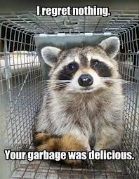 Racoon Meme - 13 hilarious raccoon memes i can has cheezburger