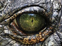 animal eye wallpaper 1600x1200 3598