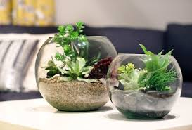 great ideas to freshen up your home with mini terrarium
