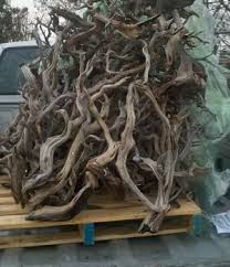 manzanita branches for sale manzanita aquarium advice aquarium forum community