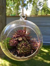 aliexpress com buy set of 2 clear hanging air plant globe