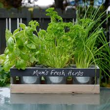 herb garden box home outdoor decoration