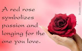 Flowers Colors Meanings - rose color meanings that u0027ll help you express the right feelings