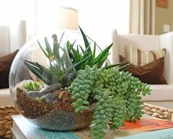 how to make an indoor succulent garden home design ideas