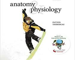 Hole Anatomy And Physiology 13th Edition Physiology Archives Digitalstore
