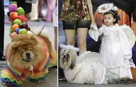 Halloween Costumes 8 Dogs Dressed Halloween Costumes Telegraph