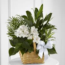 Sympathy Flowers Sympathy Flowers For The Home Or Office Ital Florist Toronto