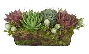 succulent arrangements succulent rectangle arrangement jayson home